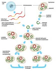 human growth hormone gmo picture 6