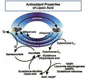 alpha lipoic acid cause body odor picture 13