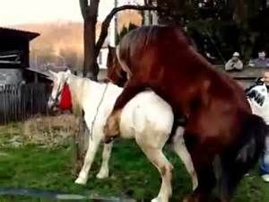 erections donkeys breeding a female donkey picture 10