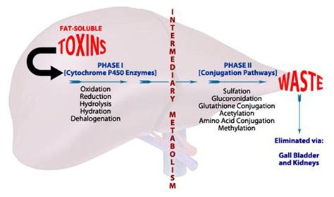 colon and liver cleansing picture 2