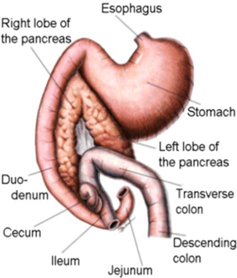 do probiotics aggravate pancreais picture 2