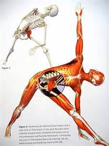 low back muscle psoais picture 9