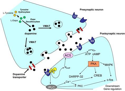 natural opioid receptor antagonist picture 9