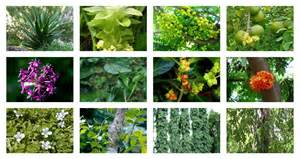 what are the latest 20 recomended herbal medicine picture 11