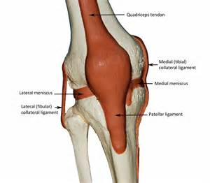 pictures of the knee joint with labels picture 1