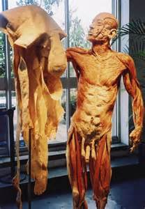 penile skin museum picture 2
