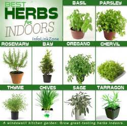 which herbal plant is best for an picture 1
