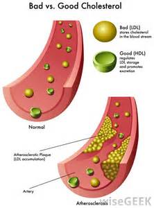 How to raise hdl cholesterol level picture 6