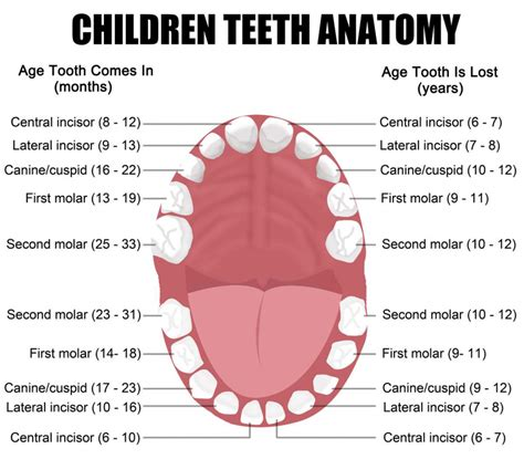 childrens teeth picture 1