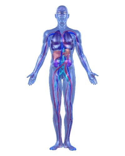 effect of mestrogen in d body picture 9