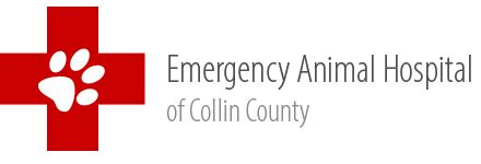 collin county health department picture 7