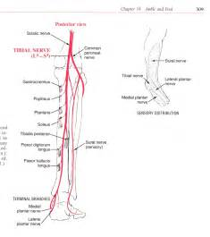 can tarsal tunnel problems restricted blood flow to picture 15
