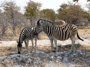 penis size botswana picture 2
