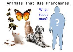pheromones effect on humans picture 10