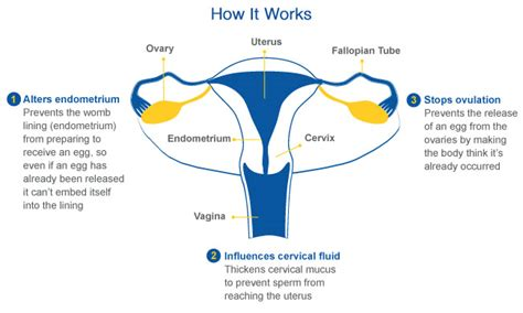does herbex stop contraceptives from working picture 7
