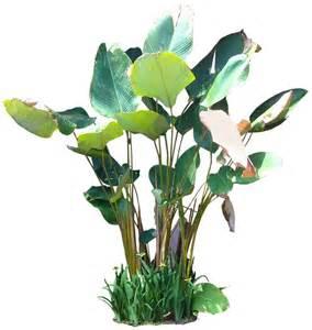 kill lepiota lutea in indoor house plant picture 3