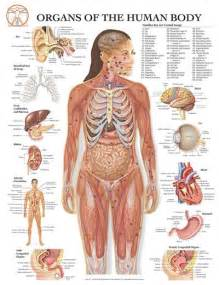 good liver health picture 18