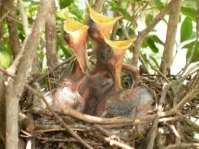 baby bird diet picture 5
