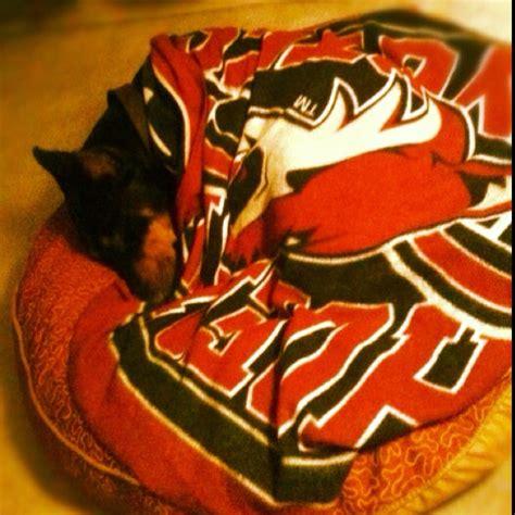 phoenix coyotes sleeping picture 13