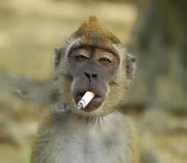 smoke ring picture 3