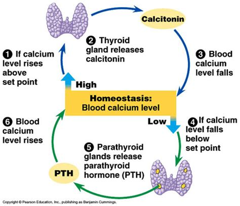 how to correct tsh levels on thyroid blood picture 4