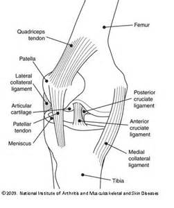 diagram of knee joint picture 6