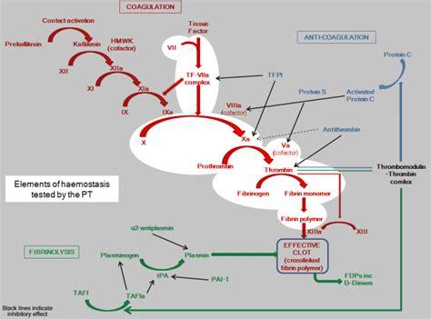 adenomyomatosis treatment picture 10