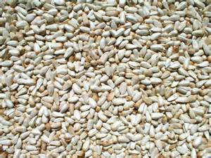 safflower seed for birds picture 3