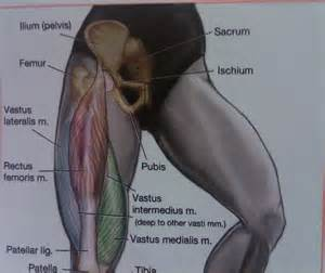 definition muscle strength picture 7