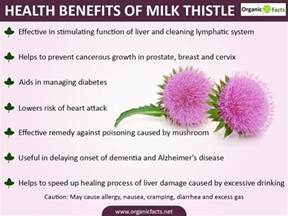 milk thistle help liver disease picture 6
