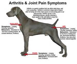 joint pain and dogs picture 1