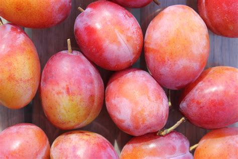 fruits that contain yeast picture 9