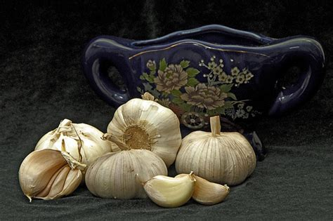 garlic for fibroids picture 5