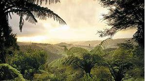ジャングル無料画像 に対する画像結果