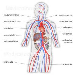 can i buy circu aid for blood circulation picture 5