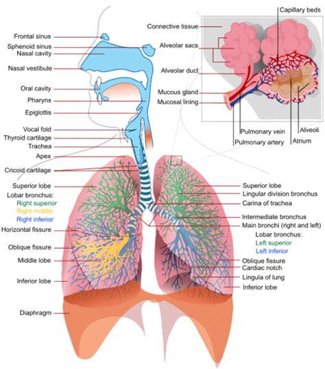 Respirator blood pressure picture 13