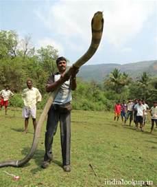 gambar penis org india picture 7
