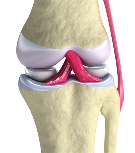 bones joints picture 2