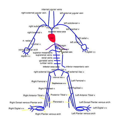 Blood flow path picture 7