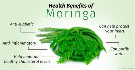 can moringa cure loss of libido picture 2