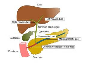 liver opening picture 1
