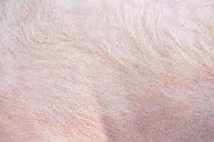 free images of skin picture 11
