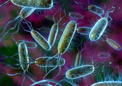 Bacteroa picture 1