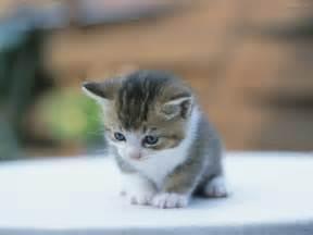 chat fete care sa dasbraca picture 6