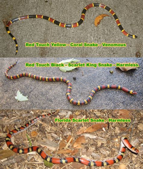 actual pictures of snakes teeth picture 7