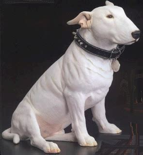 bull terrier acne picture 3