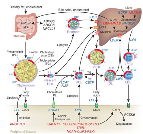 fatty liver and causes picture 7