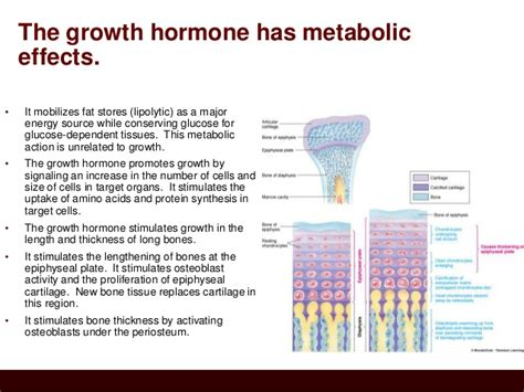 hgh levels picture 9