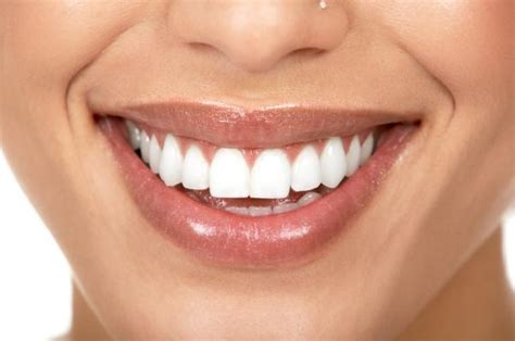 cuspid teeth picture 17