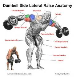 bodybuilding bones exercise and anatomy picture 13